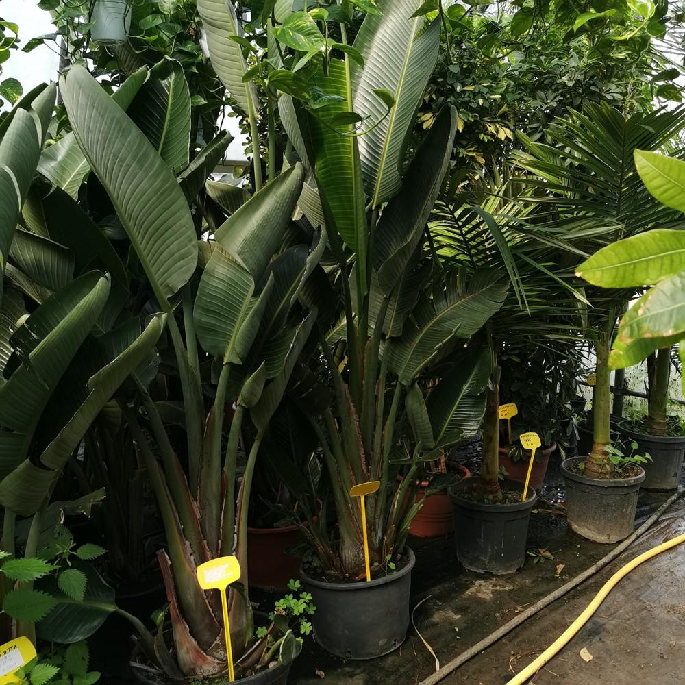 Piante Tropicali Da Interno la primavera a casa